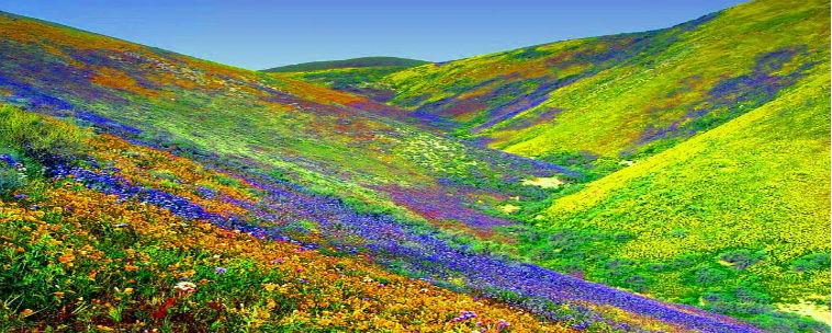 Valley of Flowers National Park, Uttarakhand | Nav Uttarakhand