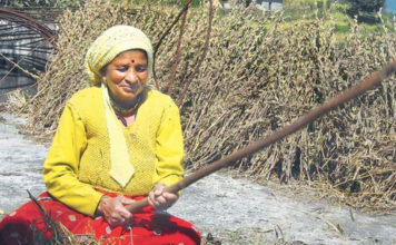 Timber mafia fighter kalawati rawat