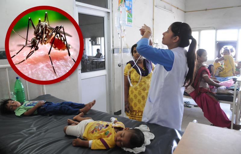 Image result for uttarakhand dengue