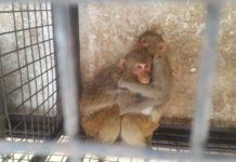 Monkey Control Programe