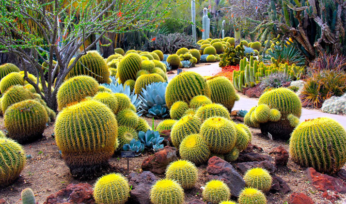 Cactus Garden With 200 Species Soon In Haldwani Nav Uttarakhand