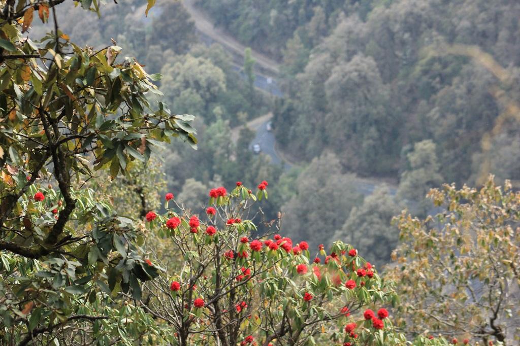 Burans Flower